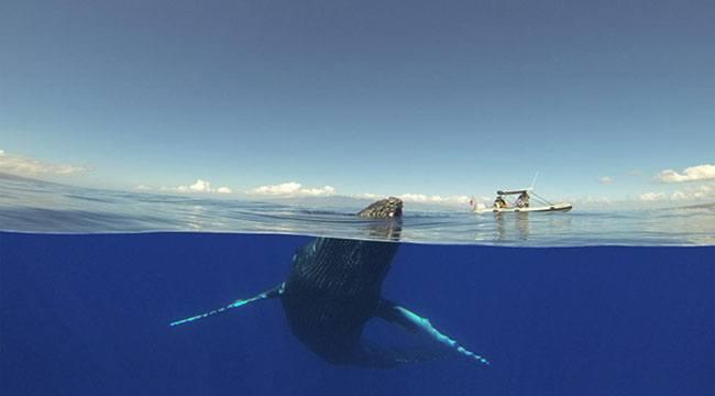 A Whale Near A Raft